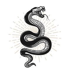 Snake on white background design element vector