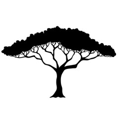 tropical tree silhouette vector image