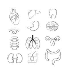 set of human body organs Anatomy design vector image