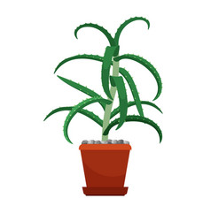 aloe vera houseplant in flower pot vector image