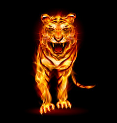 Fire tiger on black background for design vector
