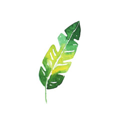 Green tropical banana leaf hand drawn watercolor vector