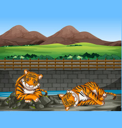 Scene with two tigers at zoo vector