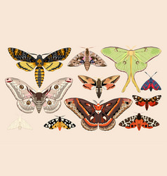 Set of moths and butterflies vector