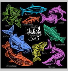 American fish - set 5 for creative design vector