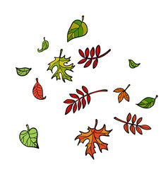 autumn leaves nature trees vector image