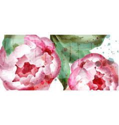 peony flowers watercolor wedding vector image