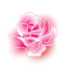 Sweet pink watercolor rose picture in dream vector