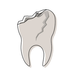 Tooth with root and broken in watercolor vector