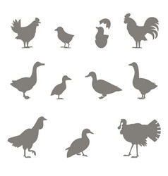 farm animals silhouettes of chickens vector image