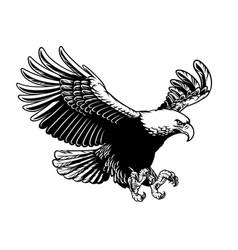 Flying eagle spread wings vector