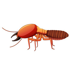 termite on white background vector image