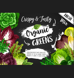 Vegetable green salads and veggie lettuces vector