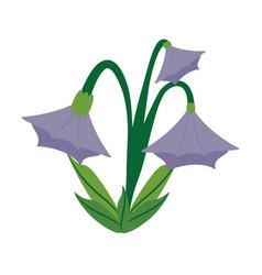 blue bell flower image vector image