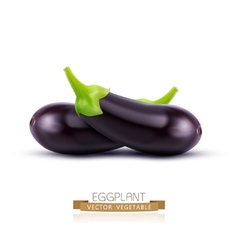 eggplant isolated on white background vector image vector image