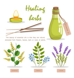 Healing herbs in essential oil promotion poster vector