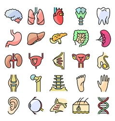 icons set with human organs vector image