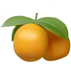 Tangerine vector