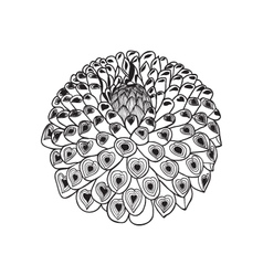 Beautiful monochrome black and white dahlia flowe vector