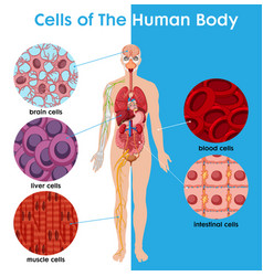 cell human body poster vector image