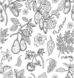 Seamless pattern with avocado tomato pepper vector