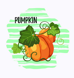 two pumpkins on the striped background vector image