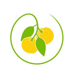 Yuzu fruit vector