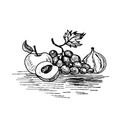 Ink drawing grape vector
