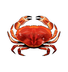 red crab from a splash watercolor colored vector image