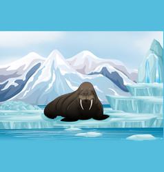 Scene with big walrus on ice vector