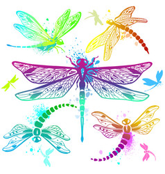 Set of color dragonflies vector