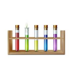 test glass tubes in rack equipment for biology vector image