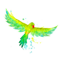 Watercolor exotic budgerigar parrot in the flying vector