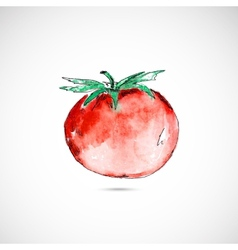 Watercolor painted tomato vector