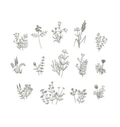 Flowers drawing vector