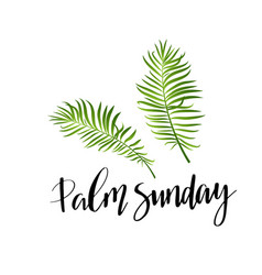 Green palm leafs icon palm sunday text vector
