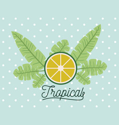 lemon slice tropical fruit with leaves on vector image