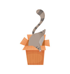 Cat trying to get into cardboard box vector