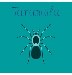 Flat on background spider tarantula vector