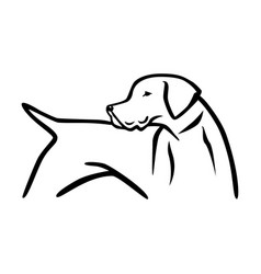 german shorthair pointer vector image