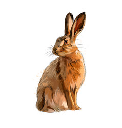 hare rabbit from a splash watercolor colored vector image
