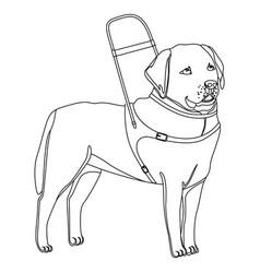labrador retriever guide dog outline vector image