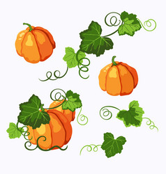 Set of pumpkins with leaves solated on the white vector