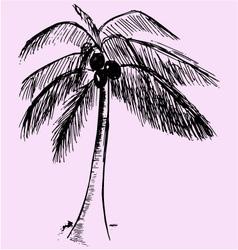 coconut tree vector image vector image