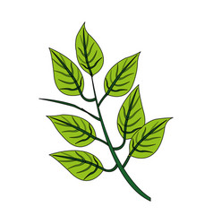 color image realistic branch with ramifications vector image vector image