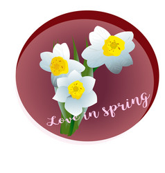 Spring flower narcissus vector