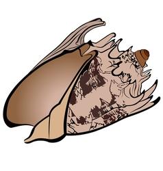 shell seashells vector image