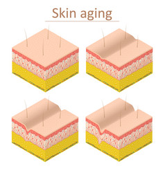 skin aging set isometric view vector image