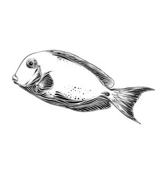 hand drawn sketch of fish in black color isolated vector image