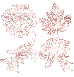 rose gold elements set hand drawn vector image